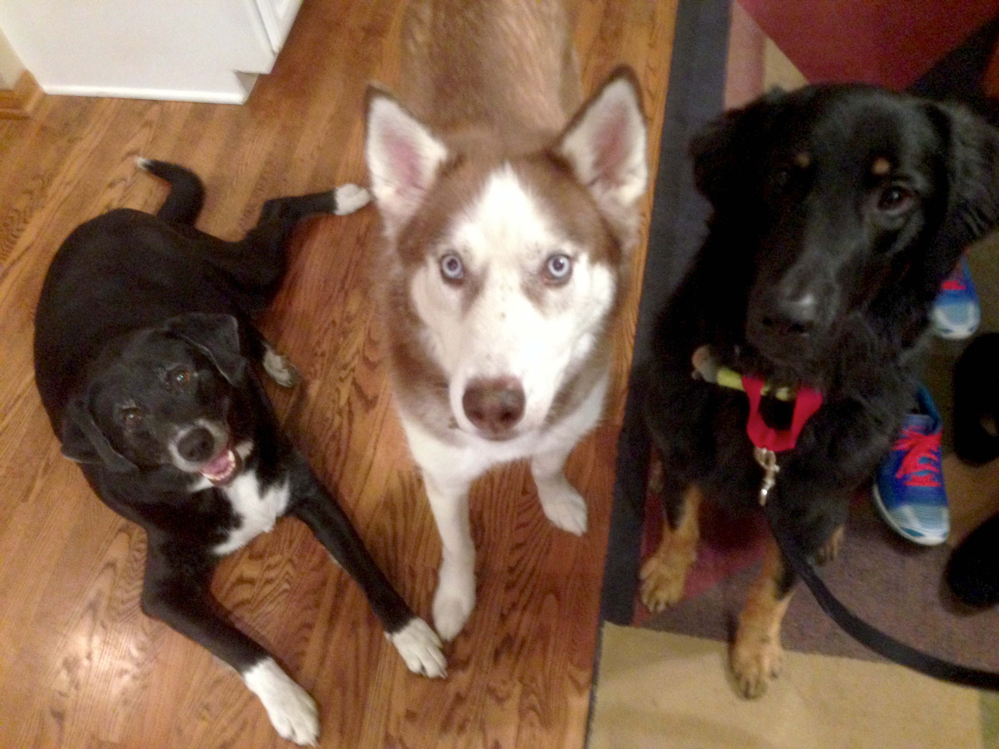 Emmit, Kodi and Hank 1