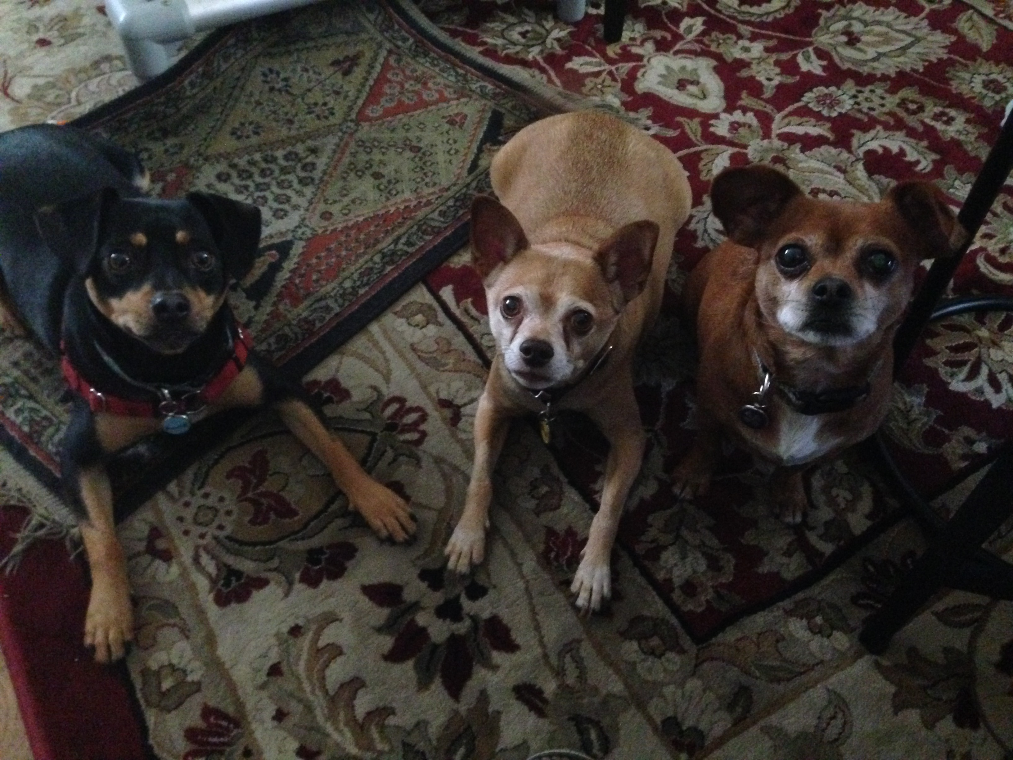 Rocket, Rudy and Roxie 1