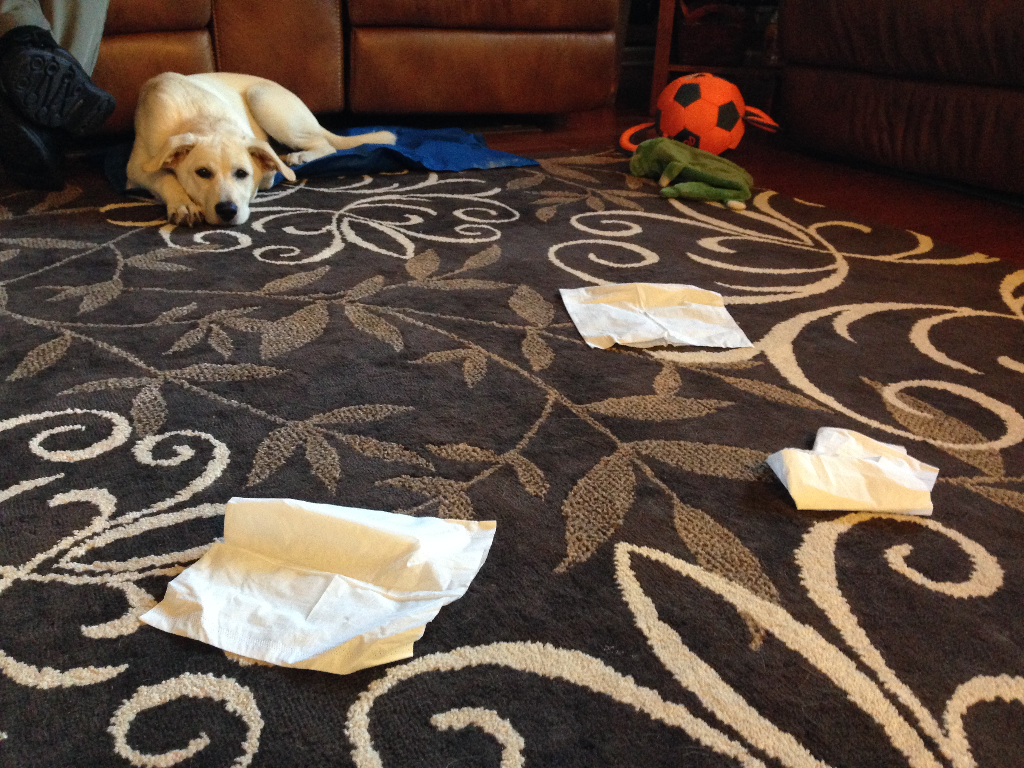 Annabelle Ignores Tissues