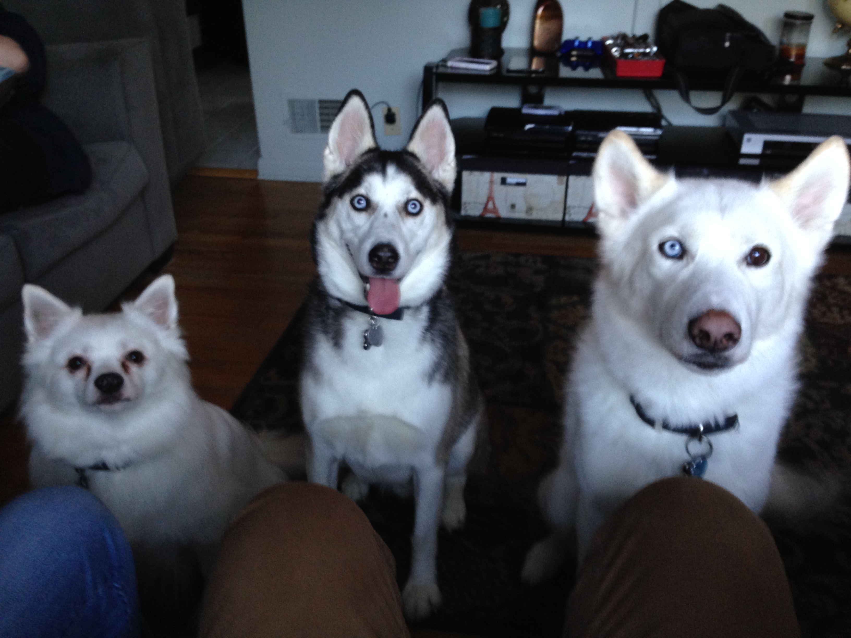 Casper, Meeko and Koda