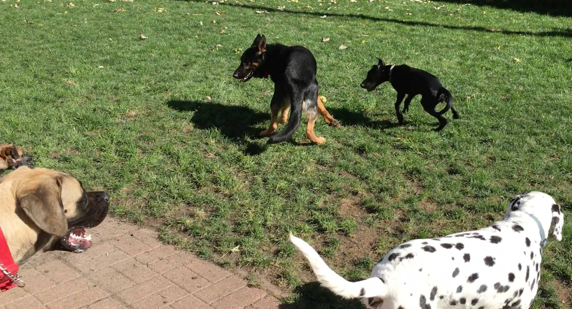 Oct Dog Play Day
