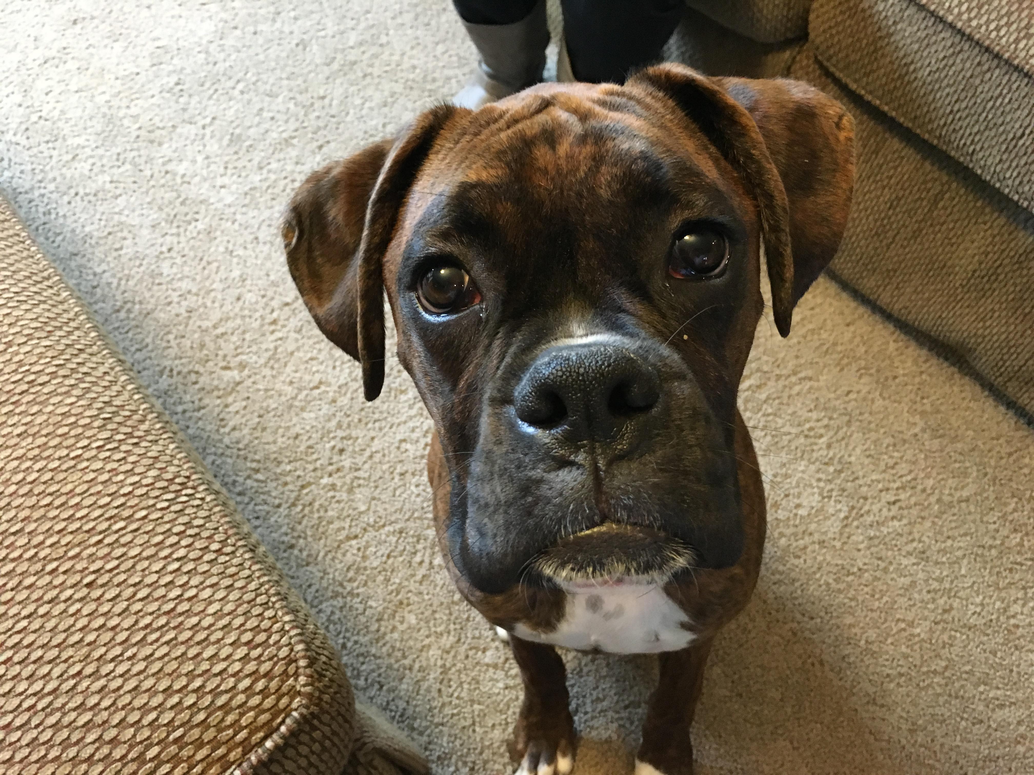 how to teach a dog to listen