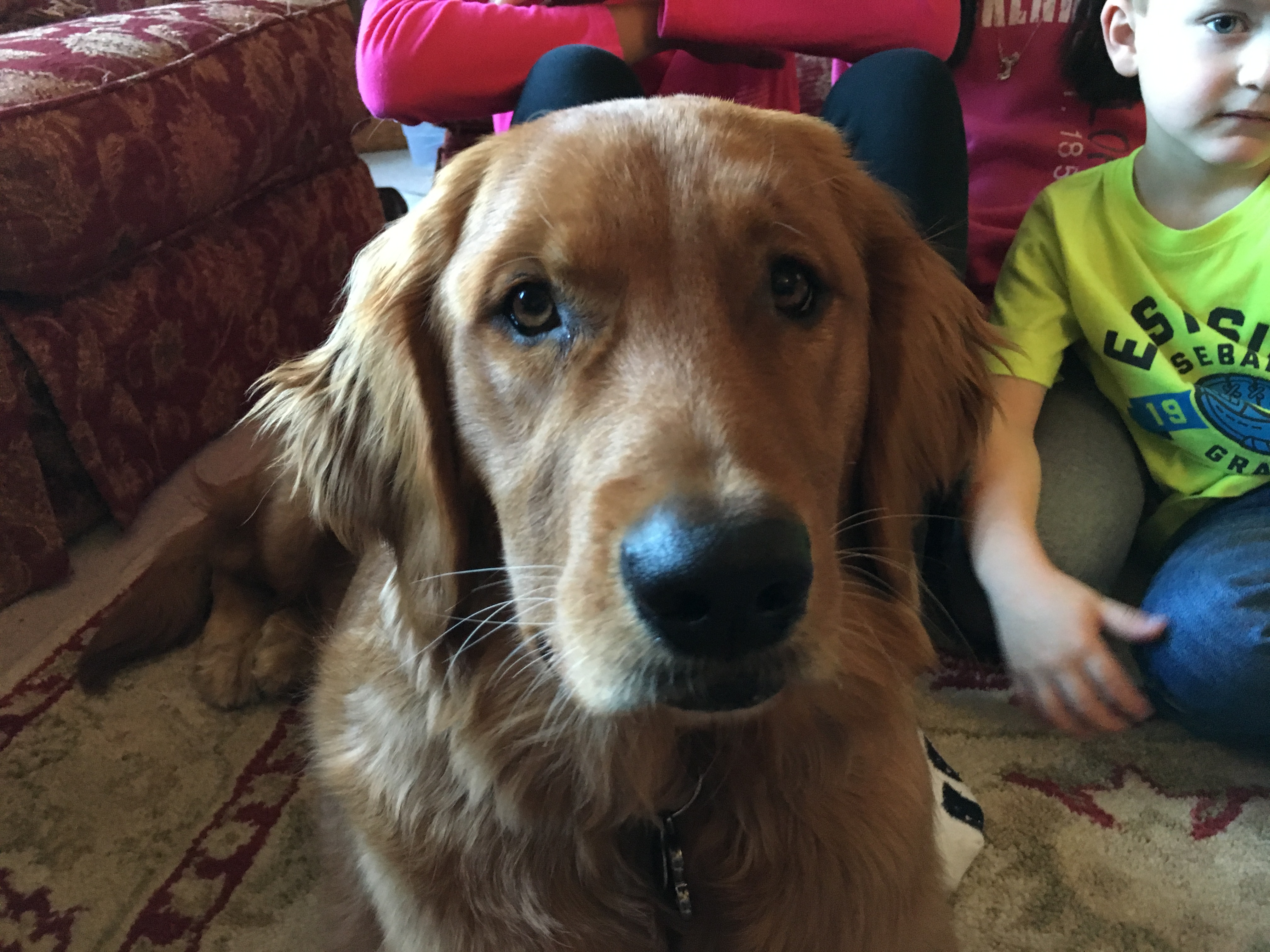 Bella (Omaha Golden)